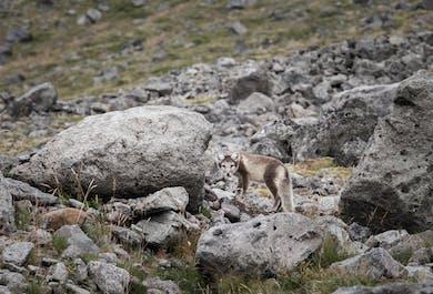 Westfjords Wildlife Photography Adventure