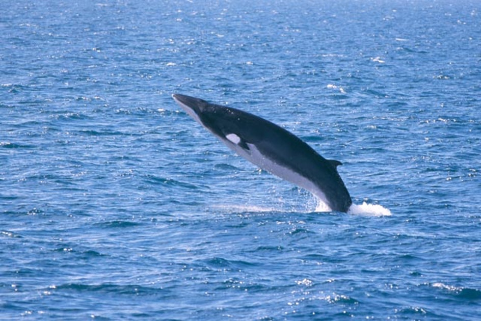 Whale Watching And Blue Lagoon Tour