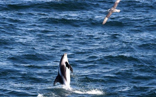 Whale Watching Tour & Blue Lagoon Trip
