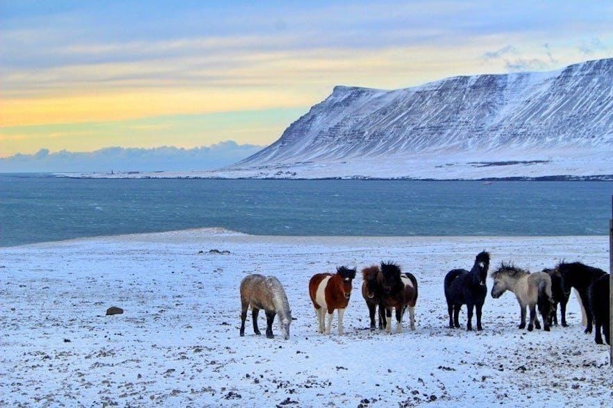 Hvalfjörður (Fjord de la baleine) en Islande en hiver