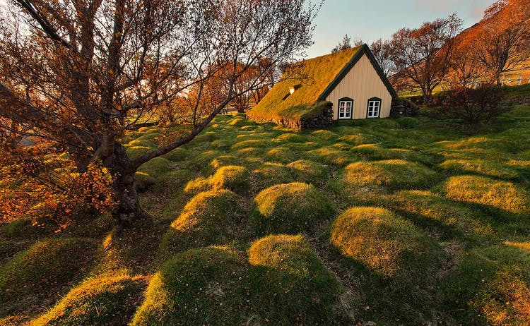 The sunlight perfectly illuminating a turf house in a field of moss in South Iceland.