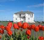 Tulips growing before Reykjavík's Hofði House, where seeds to end of the Cold War were planted.