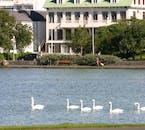 Les cygnes dans l'étang le plus célèbre de la ville, Tjörnin.