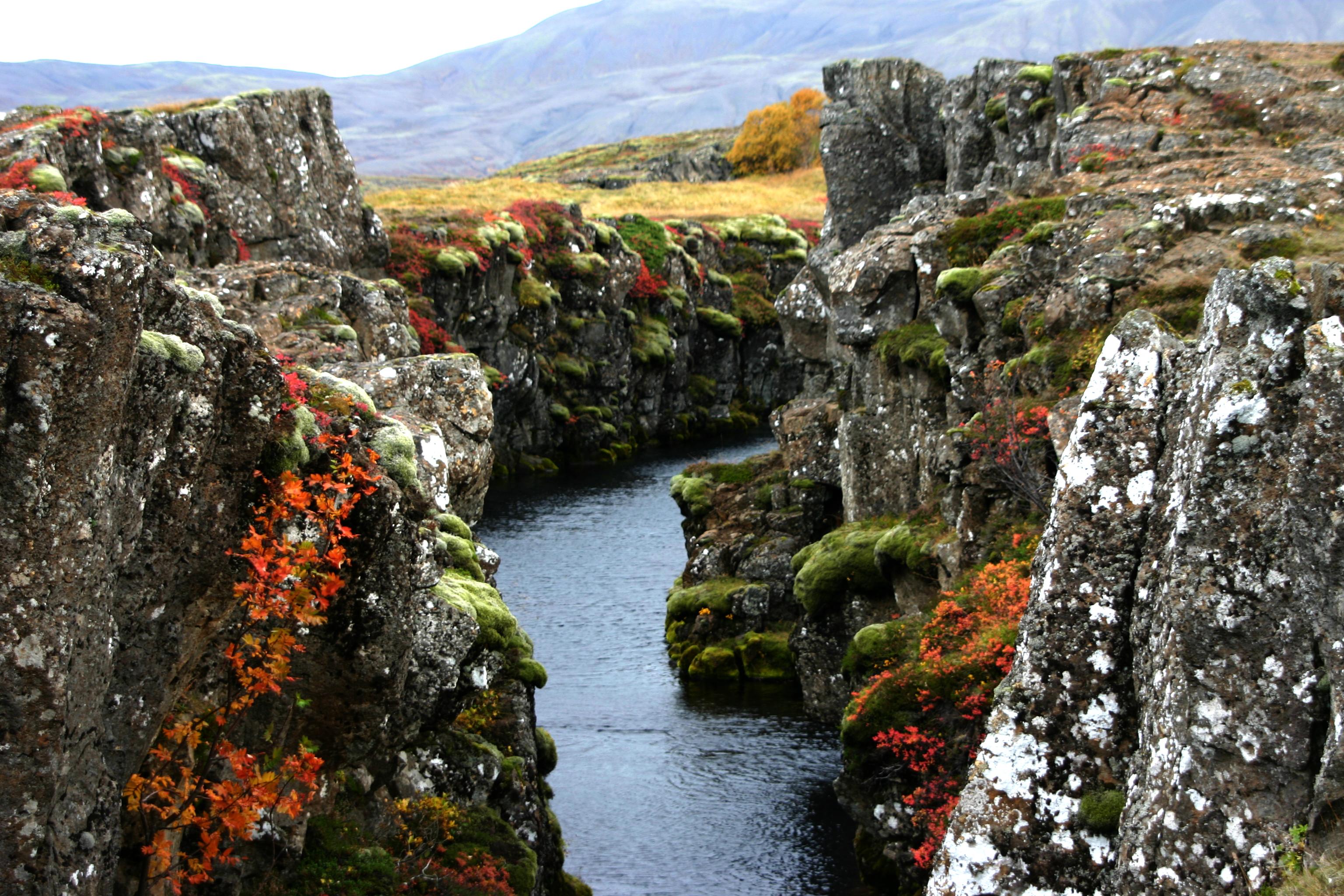 Parc national de Thingvellir, a une oasis de couleur durant les mois d'été.