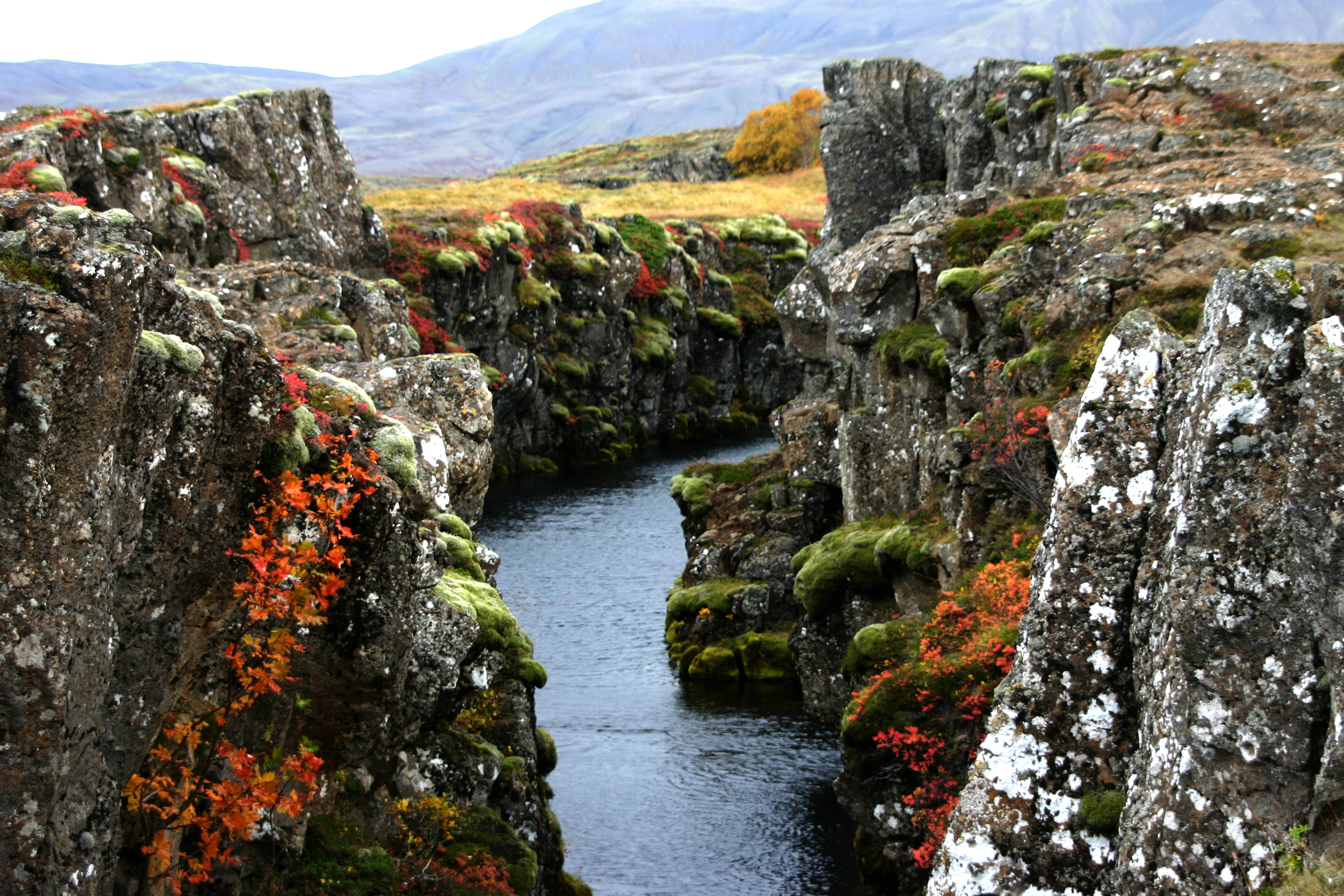 Þingvellir National Park becomes an oasis of colour in the summer months.