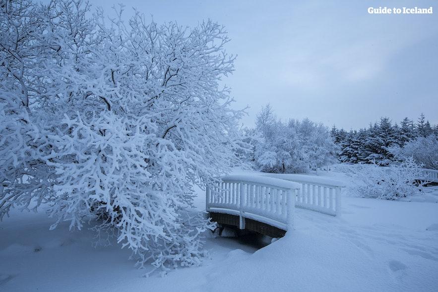레이캬비크 식물원의 겨울 풍경
