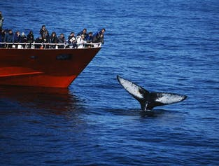 Whale Watching Adventure from Faxaflói Bay