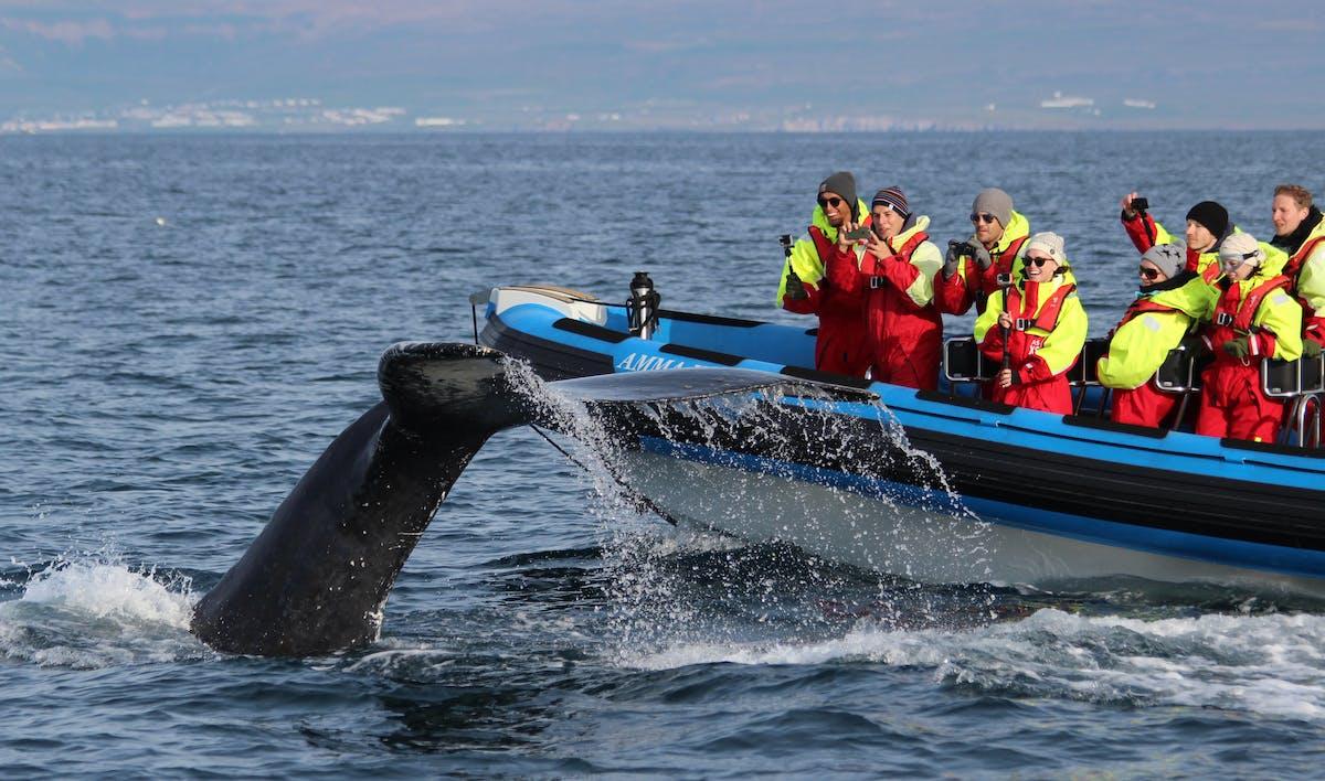 Gentle Giants Whale Watching hero image