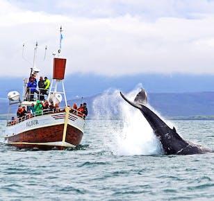 ชมวาฬด้วยวิถีโบราณของฮูสาวิค