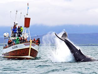 Traditionelles Whale Watching in Húsavík