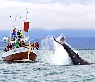 Traditionelles Whale Watching in Húsavík