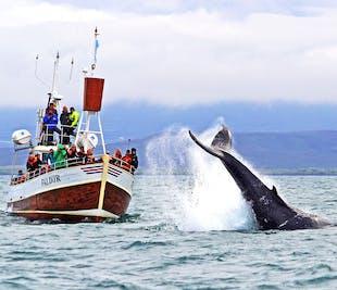 Osservazione delle balene da Husavik