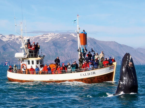 Gentle Giants Whale Watching