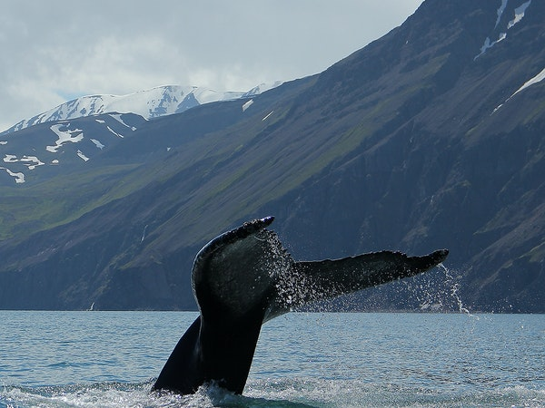 Gentle Giants Whale Watching