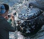 Cette excursion vous permet de vous approcher au plus près des baleines à Skjálfandi.