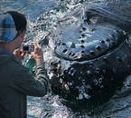 This tour lets you get up close and personal with the whales.