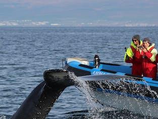 Тупики и киты | Экскурсия на лодке РИБ из Хусавика