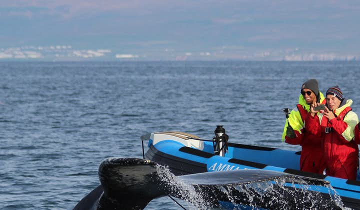 Stor hvalsafari og søpapegøjer | RIB-bådtur fra Húsavík