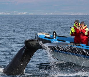 Rejs oglądania wielorybów i maskonurów | Wycieczka z Húsavíku