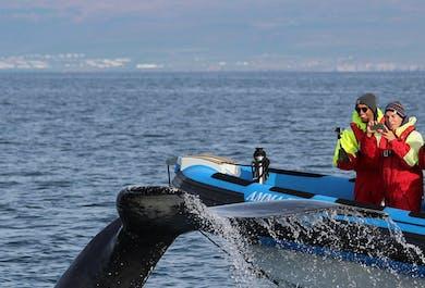 フーサヴィーク発|RIBボートで行くパフィンとホエールウォッチング
