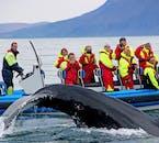 Une baleine à bosse montre aux observateurs de baleines son énorme queue.