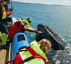 The opportunity to touch a Humpback Whale is not something to turn your nose up at.