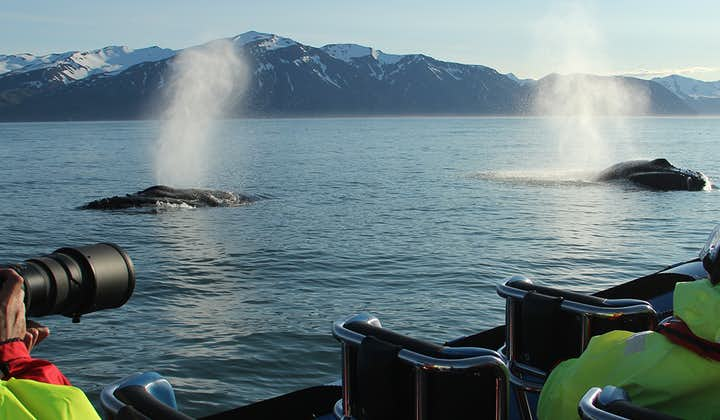 A pair of Humpbacks exhaling together after a long dive.