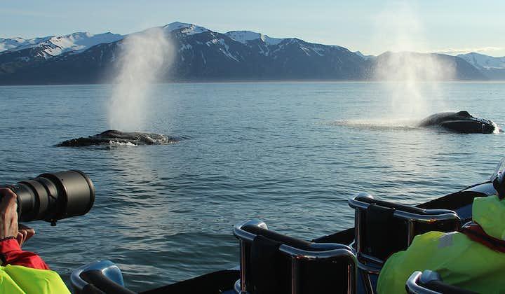 Ein Paar Buckelwale, die nach einem langen Tauchgang zusammen ausatmen.