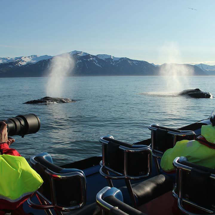 Un par de ballenas jorobadas exhalando juntas después de una larga inmersión.