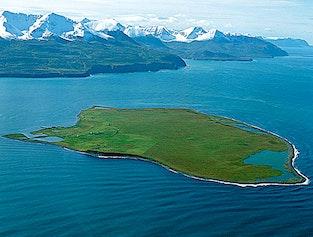 Flatey Island from Húsavík - Puffins, Bird Watching, Whales