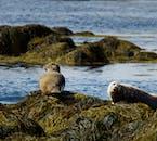 Ytri Tunga is a very popular seal-watching beach.