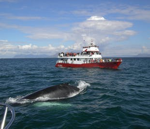 Buggy & Whale Watching from Reykjavik
