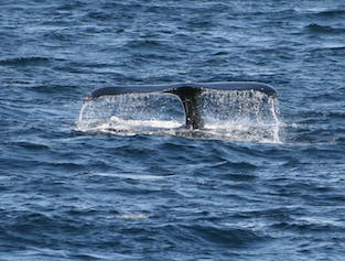 Whale Watching & Sea Angling Tour