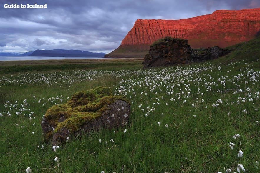 แสงสีแดงของอาทิตย์เที่ยงคืนส่องบนภูเขาในฟยอร์ดตะวันตกของไอซ์แลนด์