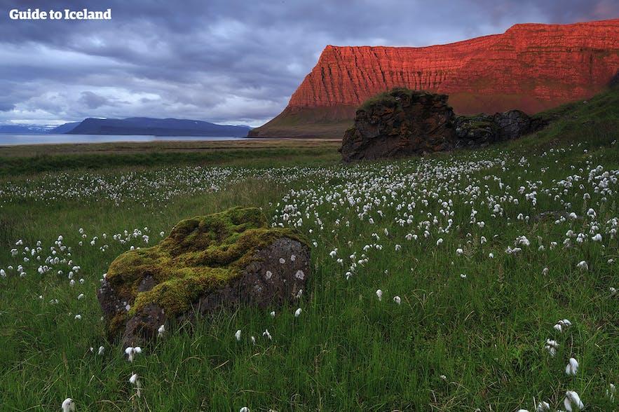 Röd midnattssol som glöder över bergen i Västfjordarna på Island