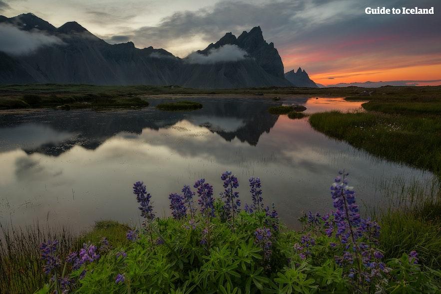 Fjellet Vestrahorn på Øst-Island sett fra Hvalnes