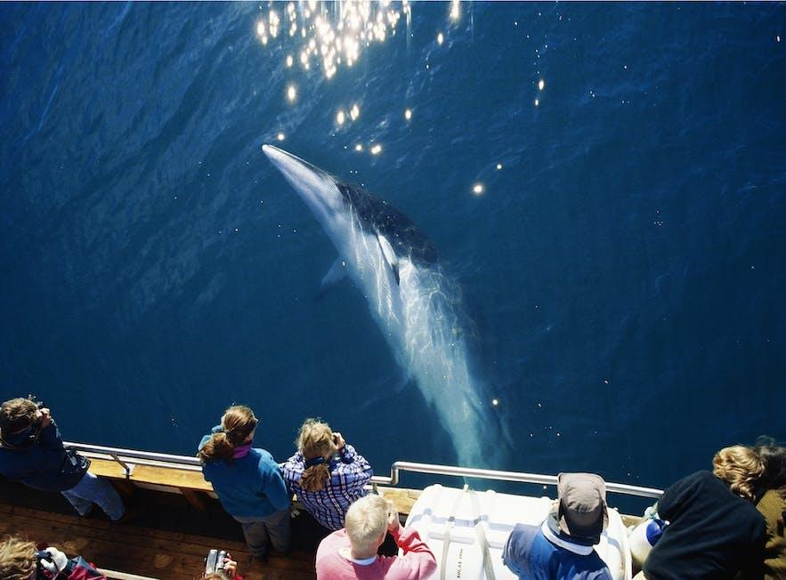 L'observation de baleines est possible au large de Reykjavik