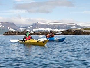 Wildlife of Vigur Island   Kayaking in the Westfjords