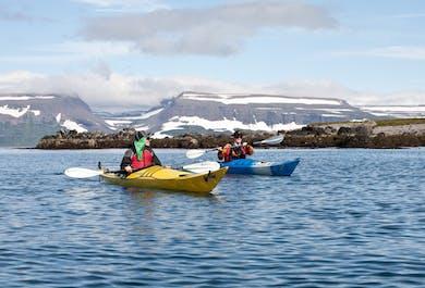 Dzika przyroda na wyspie Vigur   Kajaki na Fiordach Zachodnich