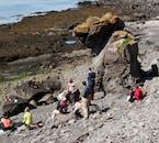 Plaże znajdujące się na wyspie Vigur są domem dla kolonii fok