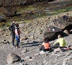 Wildlife of Vigur Island