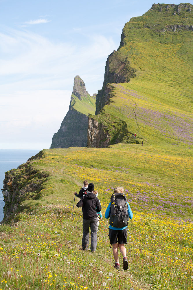 Wildblumen, dramatische Klippen und saftiges Grün prägen den abgelegensten Teil der Westfjorde im Sommer.