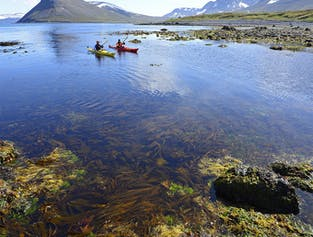 Paddle in the Wild of Hornstrandir