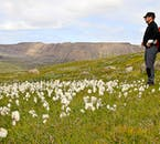 The mountains and valleys of the Westfjords in summer are renowned for their arctic flora.