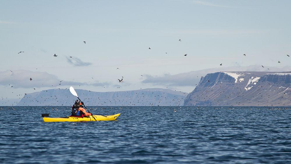 Fiordy Zachodnie to jedno z najlepszych miejsc na Islandii gdzie możesz pływać kajakiem