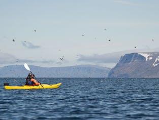 Kajaki na Fiordach Zachodnich   Wycieczka do dwóch fiordów