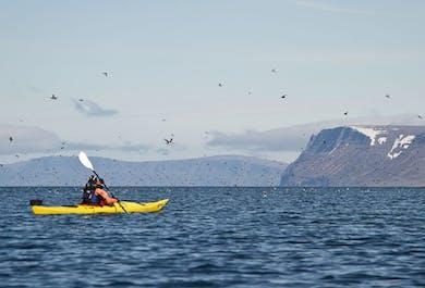 Kajaki na Fiordach Zachodnich | Wycieczka do dwóch fiordów