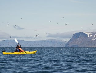 Westfjords Kayaking Day Tour   Two Fjord Adventure