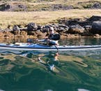 Kayak through the still waters of the Westfjords in summer.