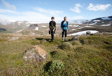 Hornstrandir Nature Reserve   Day Tour in the Westfjords